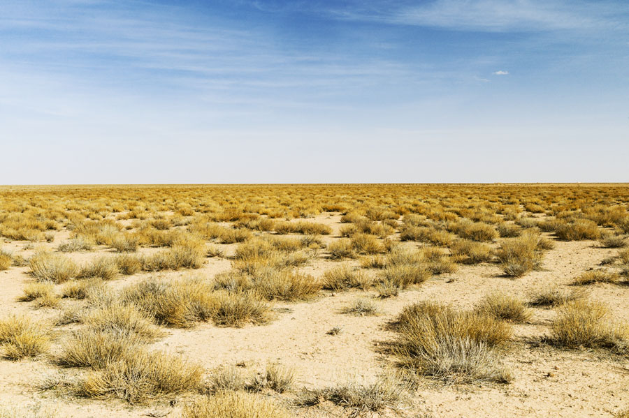 steppe, Hauts plateaux, Maroc Oriental