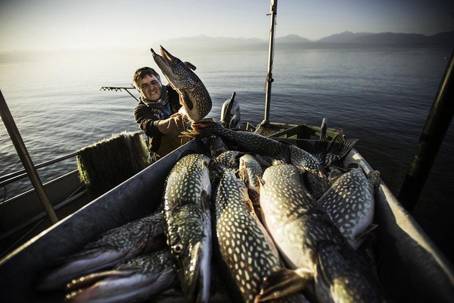 Manu Torrent, pêcheur professionnel à Tolochenaz (Morges). Jour d'ouverture de la pêche au brochet