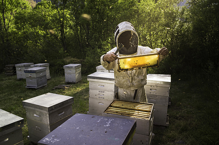Queyras, Ristolas, Michel  Collombon, apiculteur