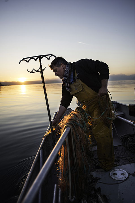 Suisse, Léman, Manu Torrent, pêcheur professionnel à Tolochenaz (Morges)
